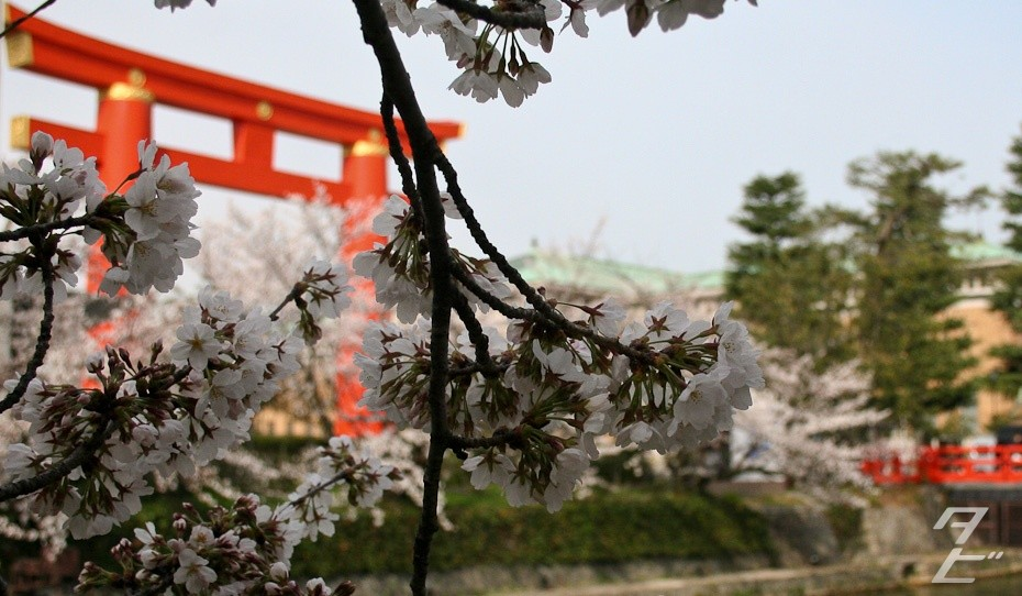 Hanami in Kyoto 2014 - Heian Shrine torii