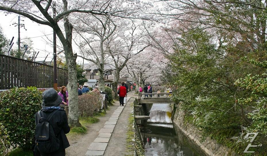 Hanami in Kyoto 2014 - Tetsugaku-no-michi