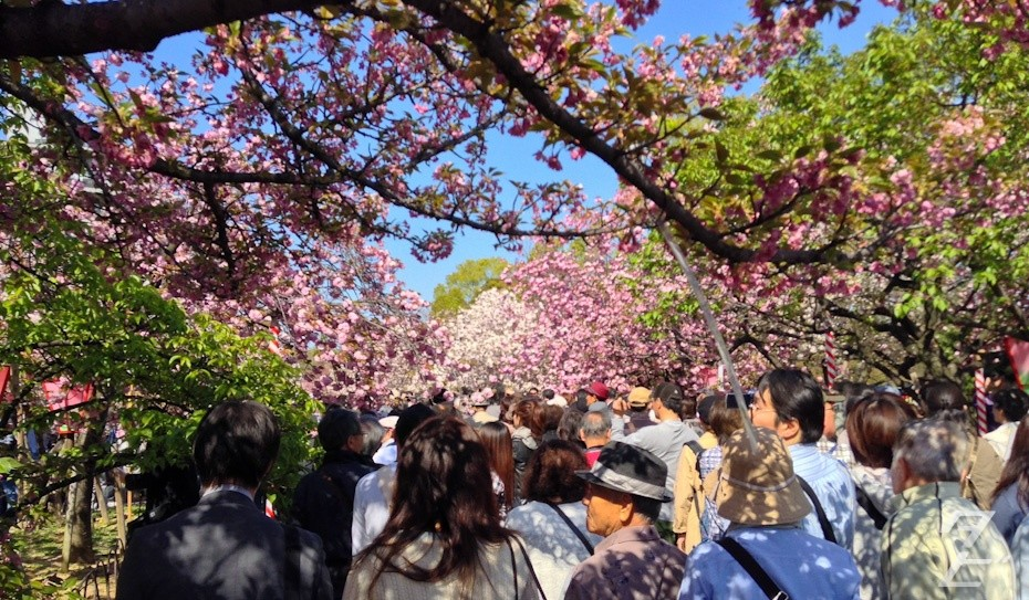 Hanami at the Japan Mint 2014