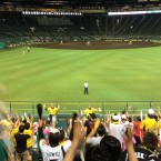 Hanshin Tigers Week: Sunday - After a WIN!
