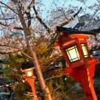 Hanami in Kyoto 2014 - Shirakawa